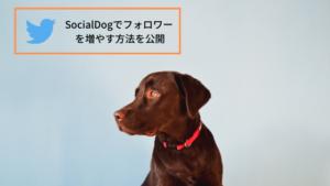 SocialDogでフォロワーを増やす方法